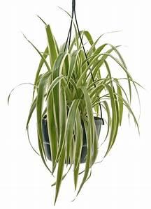 Indoor Hanging Plants Low Light Your Living Bathroom Lifestyle Home Garden Bathroom