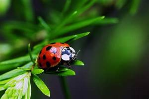 Very Sweet and Cute Animals: Funny insect wallpaper