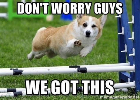 We Got This Meme - don t worry guys we got this ridiculously photogenic corgi meme generator
