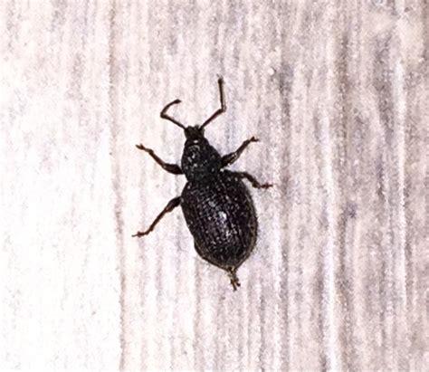 identification d un insecte en appartement