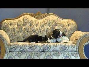 Cat and dog love story. Cutest video ever. - YouTube