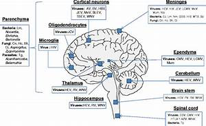 Laboratory Diagnosis Of Central Nervous System Infection