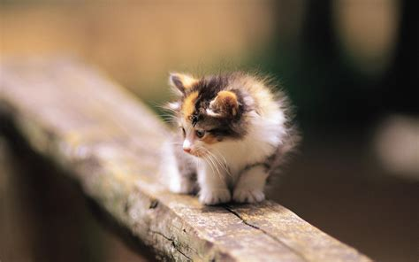 cat for free kittens images pretty kittens in yard wallpaper photos