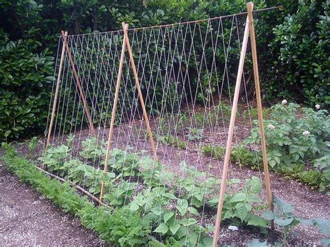 tomato trellis diy garden tips