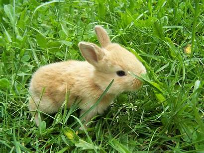 Bunnies Rabbits Wallpapers Wallpapersafari