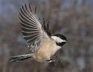 WildBird on the Fly: January 2010