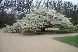 Les Plus Beaux Arbres Pour Le Jardin : des petits arbres pour petits jardins jardin du sens ~ Premium-room.com Idées de Décoration