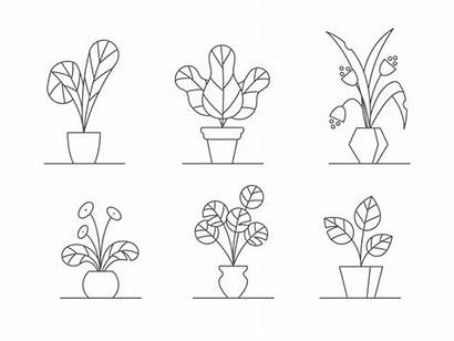Outline Indoor Pots Flowers Vector Leaves Houseplants