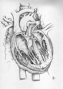 Human Heart by froggywoggy11 on DeviantArt