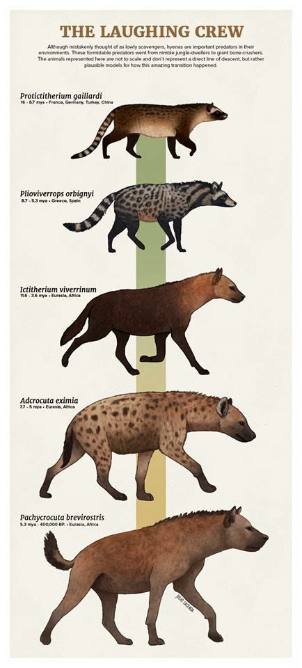 hyena evolution paleo foods extinct animals
