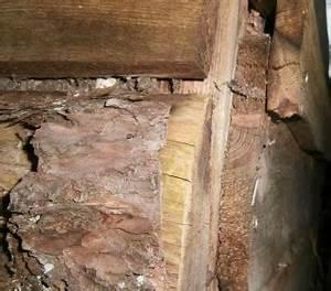 Komposter Holz Selber Bauen : komposter selber bauen macht das einen sinn ~ Articles-book.com Haus und Dekorationen