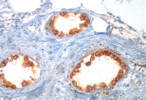 cabinet d anatomie et de cytologie pathologiques quimper