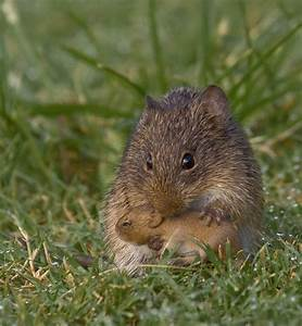 Mama and baby vole. | Happiest Place on Earth | Pinterest