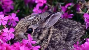 Beautiful Spring Desktop Wallpaper | ... , animals, large ...