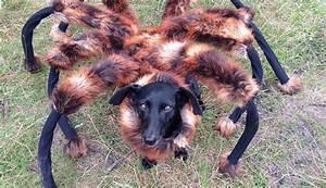 Faire Fuir Les Araignées : il transforme son chien en araign e g ante pour faire peur aux passants buzz insolites ~ Melissatoandfro.com Idées de Décoration