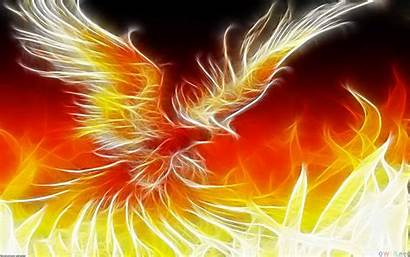Phoenix Fantasy Background Wallpapers Animals Wall