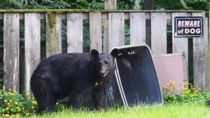 As bears come out of hibernation, B.C. urges homeowners to ...