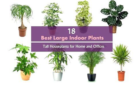 Best Bedroom Plants Uk