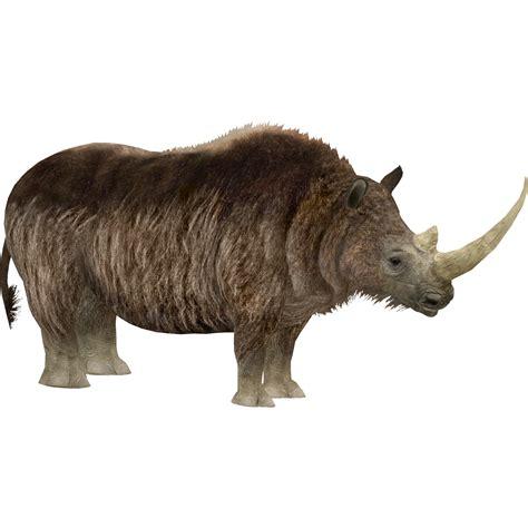 woolly rhinoceros lights zt  library wiki