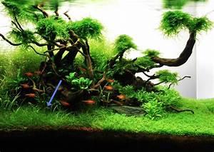 Aquarium Einrichten 60l : eleocharis parvula ~ Michelbontemps.com Haus und Dekorationen