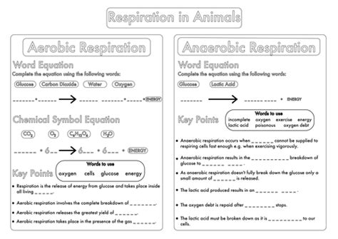 gcse worksheet on respiration by beckystoke teaching
