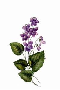 Viola Flower Drawing | www.pixshark.com - Images Galleries ...