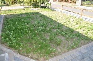 Wann Wächst Rasen : rasen neuanlage unkraut pur im neuen rasen hausbau blog ~ Markanthonyermac.com Haus und Dekorationen