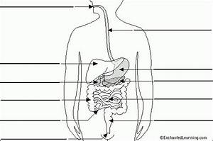 Human Digestive System On Pinterest