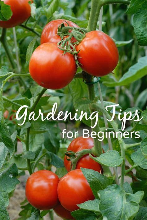 Gardening Tips For Beginners  Mom It Forward