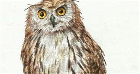 menggambar burung hantu  pensil warna teknik