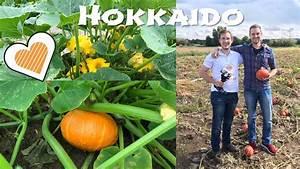 Hokkaido Kürbis Anbau Triebe Kürzen : hokkaido k rbis pflanzen anbau und ernte youtube ~ Yasmunasinghe.com Haus und Dekorationen