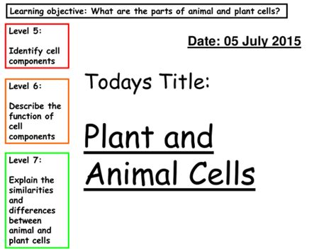 Plant And Animal Cells By Cadia1
