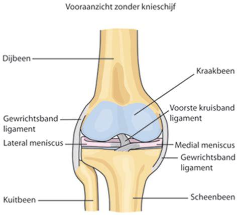 Geert Vandendriessche, Orthopedie en Traumatologie