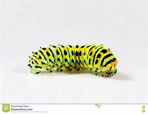 Colorful Caterpillar Stock Photography - Image: 20386692