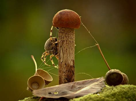 ordinary mushrooms   magical world  vyacheslav