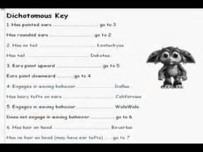 Dichotomous Key Worksheet