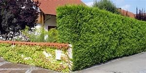 Bewässerungsschlauch Für Hecken : das kosystem hecke richtiges hecken schneiden und hecke pflanzen ~ Frokenaadalensverden.com Haus und Dekorationen