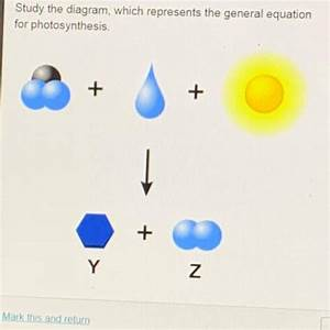Study The Diagram  Which Represents The General Equation