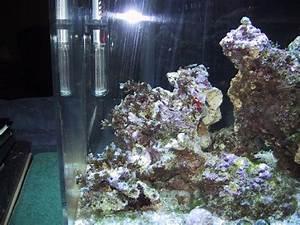 Scott and Erci's Aquariums