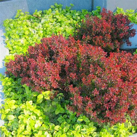 flowering shrubs pacific northwest flowering evergreen shrubs pacific northwest thin blog