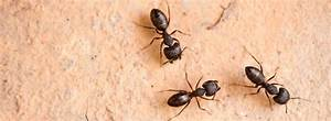 Amazing varieties of Ants , its infestation & eradication