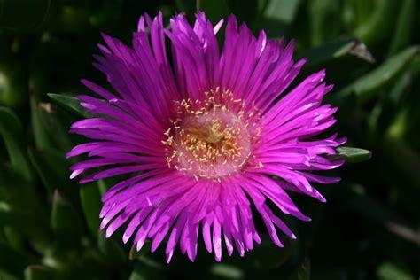 plante grasse fleur fleur de plante grasse photo de photos fleurs plantes