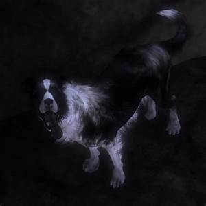 Information about Fable 3 Evil Dog - yousense info