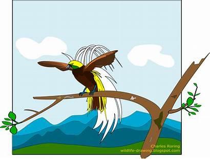 Burung Jantan Cendrawasih Hutan Papua Tropis Bird