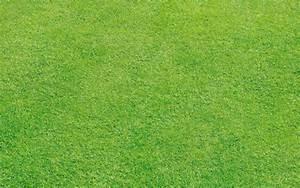 Rouleau Gazon Naturel : pose de gazon jardin plaque rouleau synth tique ~ Melissatoandfro.com Idées de Décoration