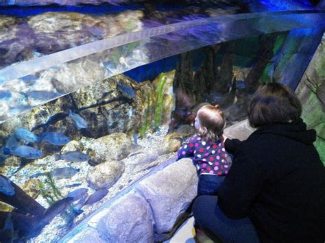 sea aquarium california lego in the shark tank picture of sea aquarium carlsbad tripadvisor