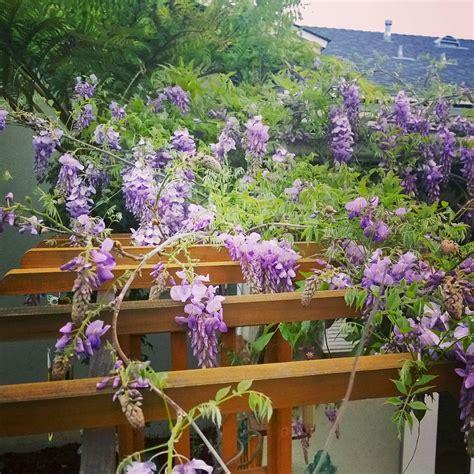 Cottage Garden Ideas by Simple Cottage Garden Ideas