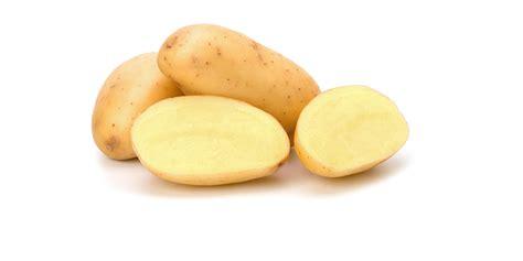 pomme de siege agromex spécialiste import export pommes de terre et oignons