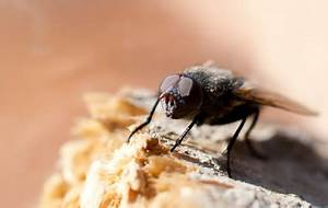 Se Débarrasser Des Guepes Maçonnes : se d barrasser des mouches ~ Carolinahurricanesstore.com Idées de Décoration