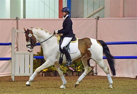 horse auction brightwells elite horses dressage coloured sales december breeding results highlights hound under